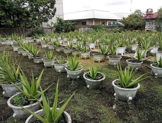 Aloevera Center Pontianak @astonpontianak